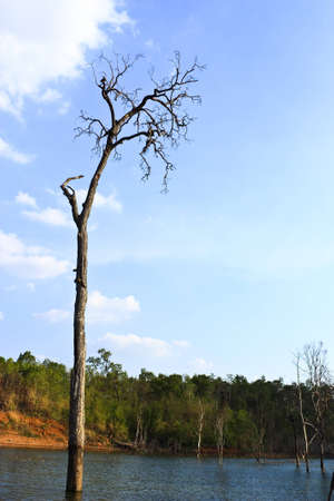 Dead trees and the sky taken at dam Nong Ka Tao Wang cement. photo