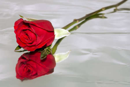 Red roses to those we love and we want them to love us too. photo