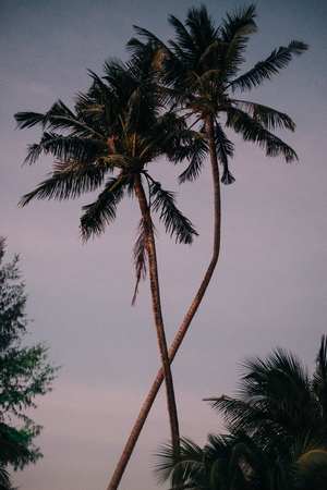 Postcard motive: Two palms during sunset on tropical island give an exotic feeling to the viewer Stock Photo