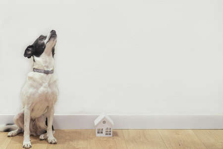 Photo of sweet dog and small white wooden house. Adoption and pet concept. Reklamní fotografie