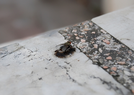 fly on the Stone table photo