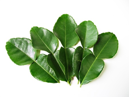 Kaffir lime leaves photo