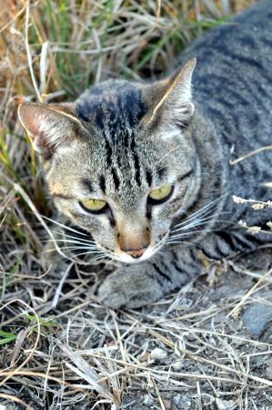 graden: Lazy cat on graden Stock Photo