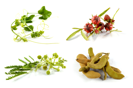 4 vegetables isolated on white