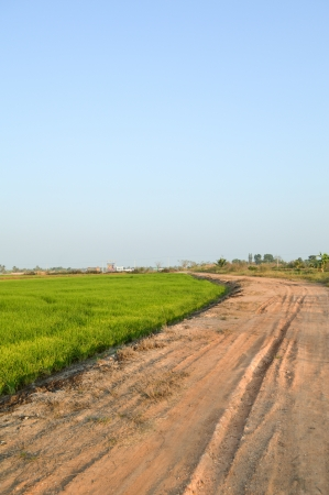 soil road with rice field in thailand photo