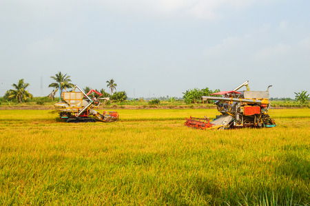 harvesters: harvesters in the field of Thailand