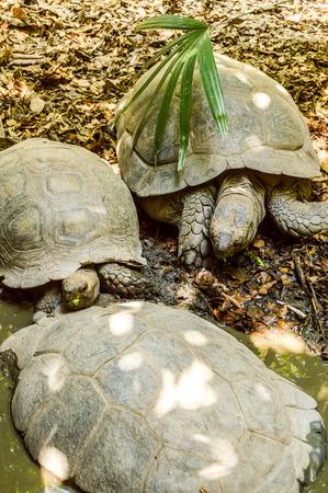 slowness: tortoise