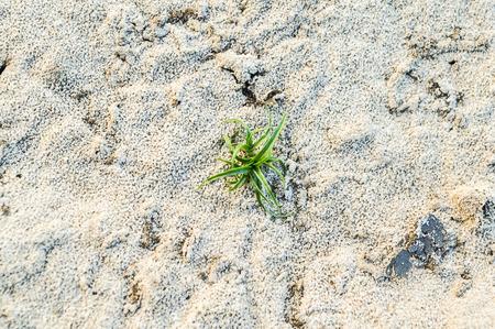 plant on the barren soil