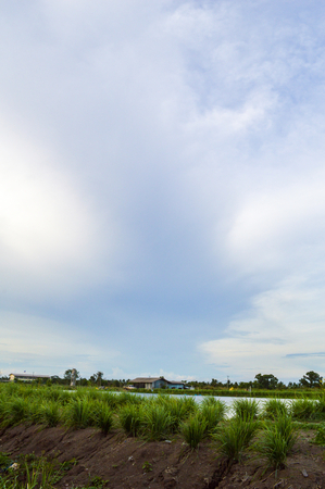 fish ponds and green fields