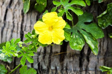 yellow bitter flower