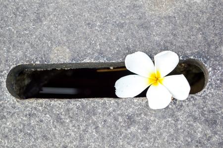 plumeria on cement floor