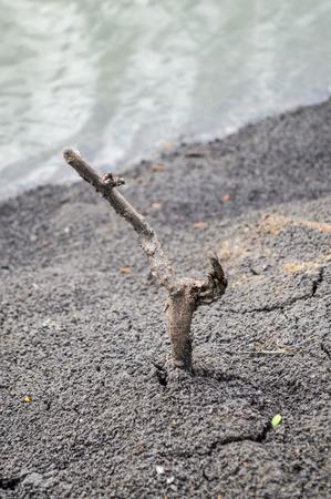 dry Twigs in soil
