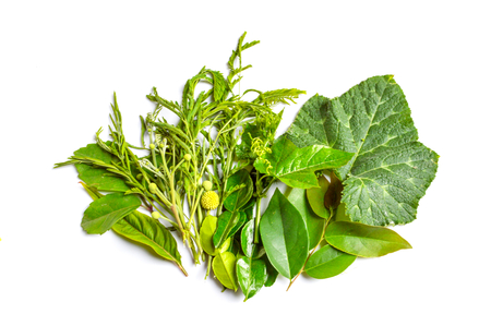 green herb Stock Photo