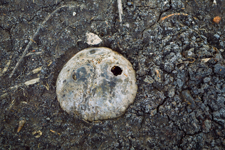 embed: coconut shell in soil