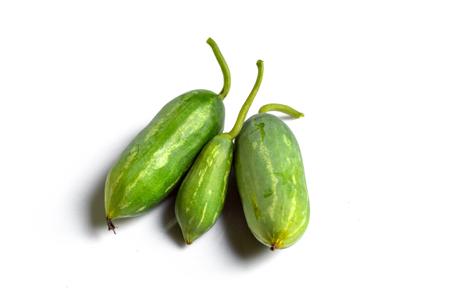 Coccinia grandis, Ivy kalebas, Cucurbitaceae Stockfoto