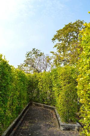 grass wall in suanluang garden 版權商用圖片