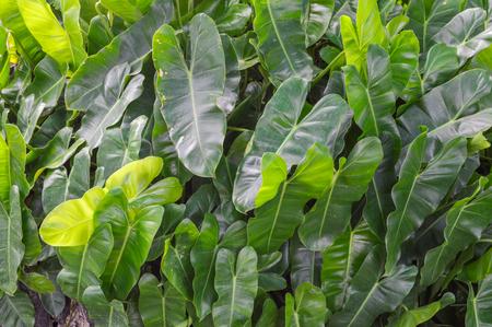 green leaf Imagens