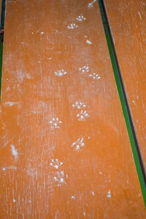 cat footprints on wood floor Stock Photo - 30149628