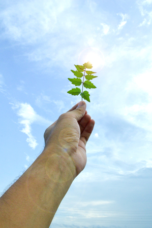 fourleaved: The person holds in a hand a leaf on a background of the cloudy sky Stock Photo