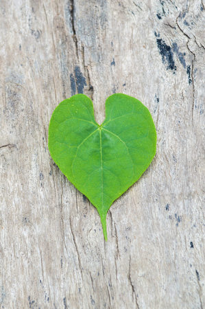 convolvulaceae: Heart-leaved on wood floor  Stock Photo