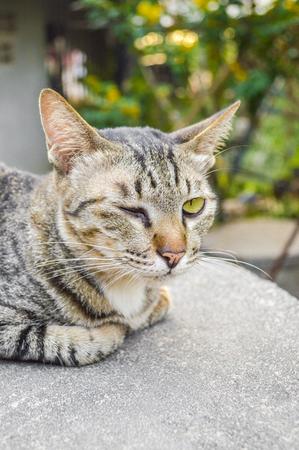 blink: cat blink