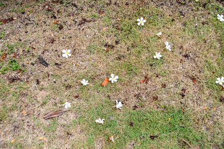flower on Green grass  photo