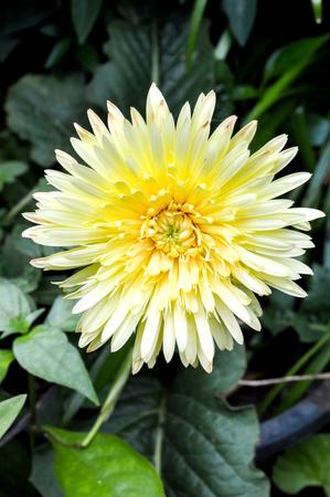 flores fucsia: Flores fucsias