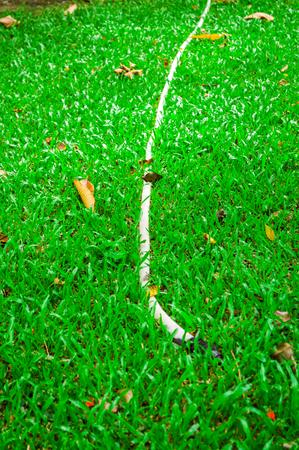 rubber tube in garden