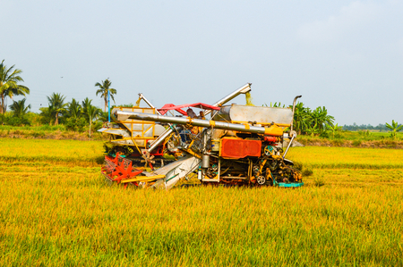 harvesters in the field of Thailand  photo