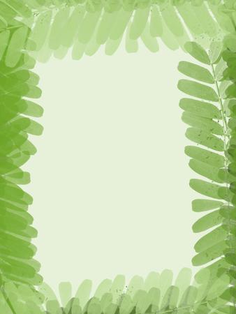 leaves frame: tamarindo verde deja el marco