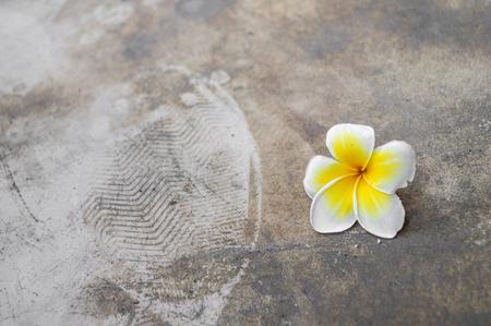frangipani flower on dirty cement floor