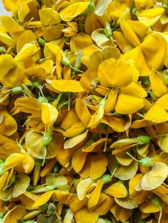 Yellow Sesbania Stock Photo - 30949629