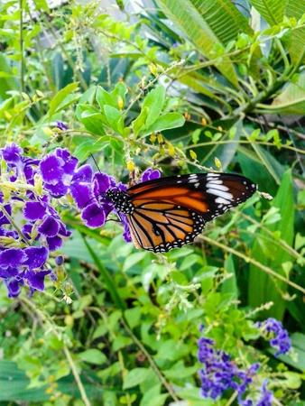 정원에서 아름 다운 나비