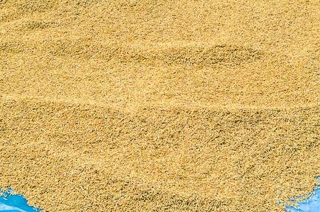 Paddy rice Stock Photo