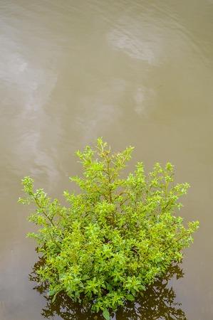 grass in riverside Banco de Imagens