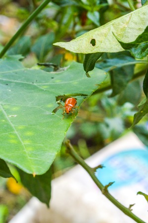 Insect on leaves