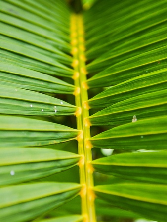 backdrop: Palm leaves