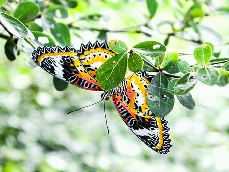Beautiful butterfly under green leaves in garden.