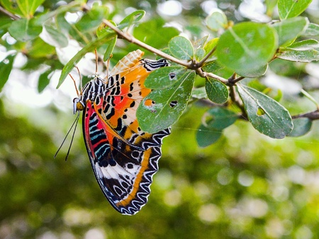 Butterfly under green leaves