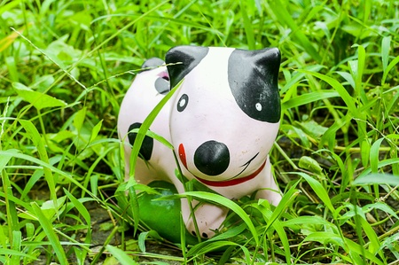 Dog toy on green grass