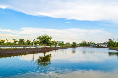 fish pond in Thailand