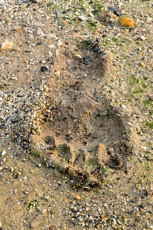 Footprint on the ground
