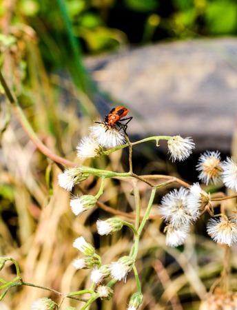 insect on flower grass in garden Zdjęcie Seryjne
