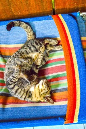 cat sleep Stok Fotoğraf