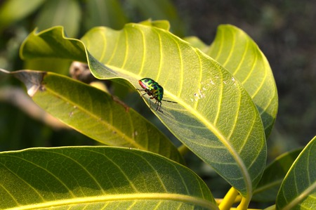 Insect on green leaves Zdjęcie Seryjne