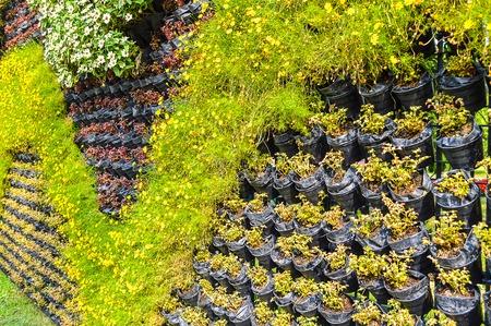 plant wall in Suan Luang Rama IX garden