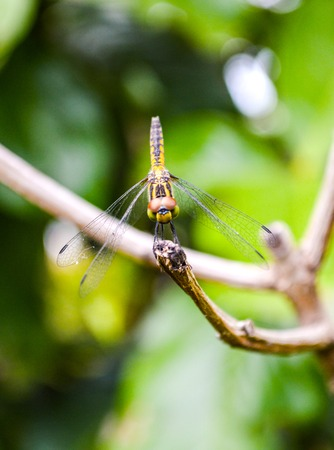 Dragonfly in garden photo