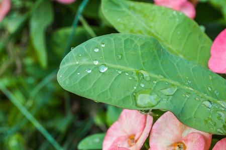 dew on green leaves Banco de Imagens
