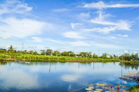 fish pond in Chachoengsao Thailand