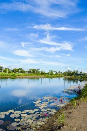 chachoengsao: fish pond in Chachoengsao Thailand
